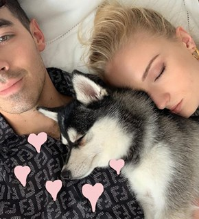 It Looks Like Sophie Turner and Joe Jonas Have a Furry New Family Member